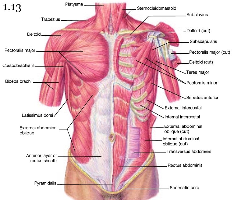 Mini Handbooks Skeletal Muscle Group Iii