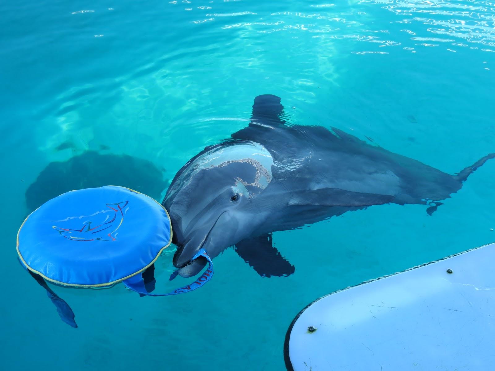 Cerebral Palsy Family Clearwater Marine Aquarium