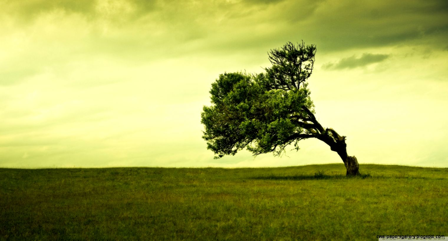 Green Tree HD desktop wallpaper  Widescreen  High Definition