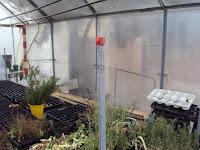 riego invernadero semillero