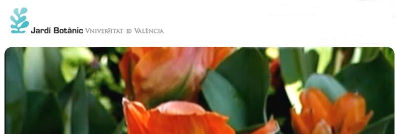 Conferencias en el jard n bot nico de valencia jardiner a y paisajismo paisajismo sostenible - Paisajismo valencia ...