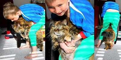 kid holding kitten