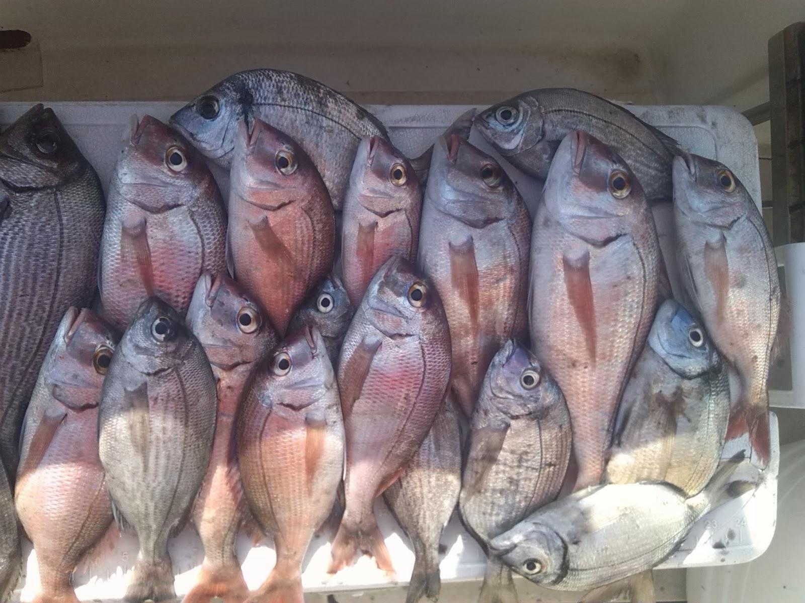 Snapper fishing in Marbella charter boat. Malaga, Spain.