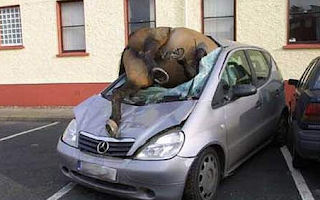 Funny picture: dead animal on the windshield of mercedes
