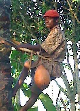 Produtor de Vinho de Palmeira