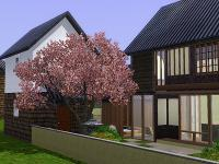 Machiya-Backyard.jpg