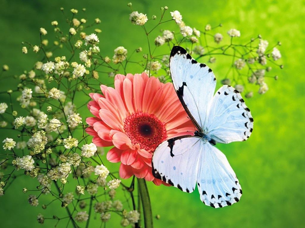 With Many Different Species Of Butterflies Free Butterfly Wallpaper Depicts Some The Common Ones These Show Features And Colourations