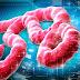 La solución al virus del ébola podría estar en España