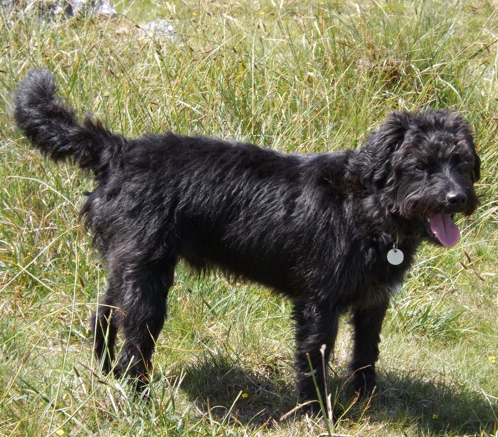 Dartmoor Dog Walks