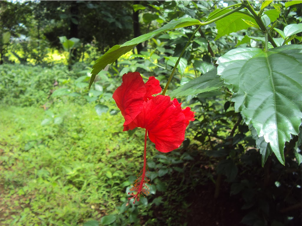 Popular flowers of Kerala