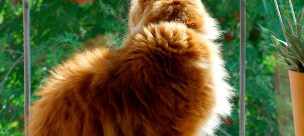 Смотрящий в окно кот