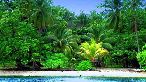 دولة بابوا غينيا الجديدة غينيا