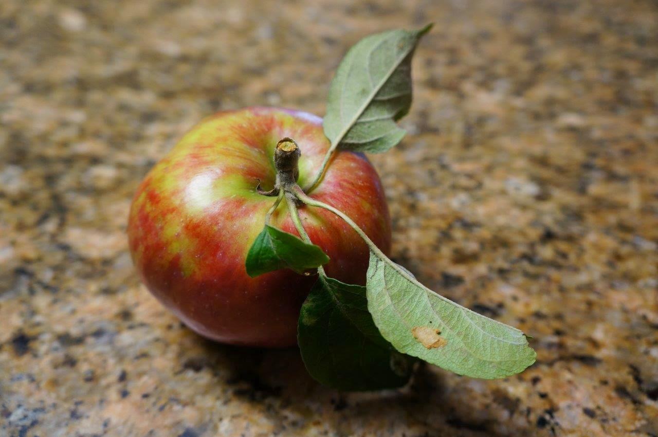 Organic apple from my garden, unknown variety.