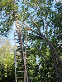 Pihapuiden ja satunnaisesti konkeloiden kaatoja harkinnalla Pirkanmaalla Ylöjärvi Tampere Kangasala