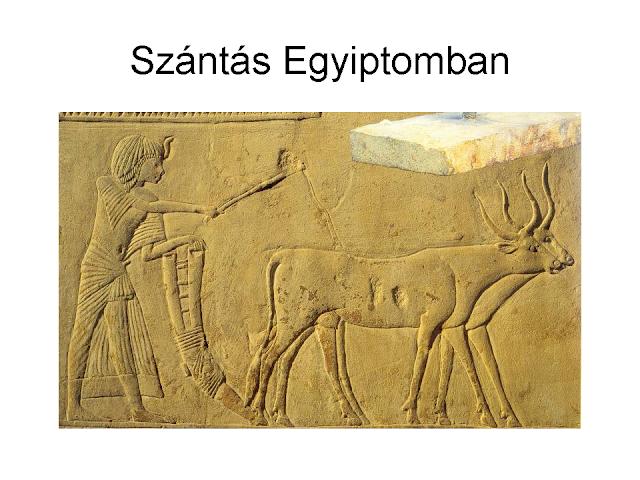 szántás Egyiptomban