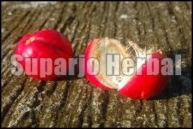 Manfaat Mahkota Dewa Bagi Penderita Penyakit Jantung Koroner