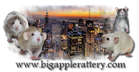 Big Apple Rattery
