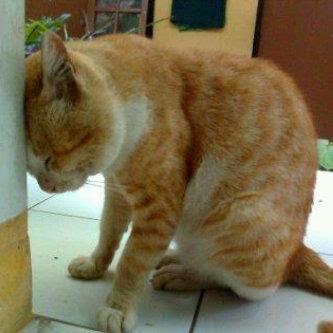 Kucing Galau