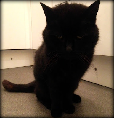 Murphy Cat