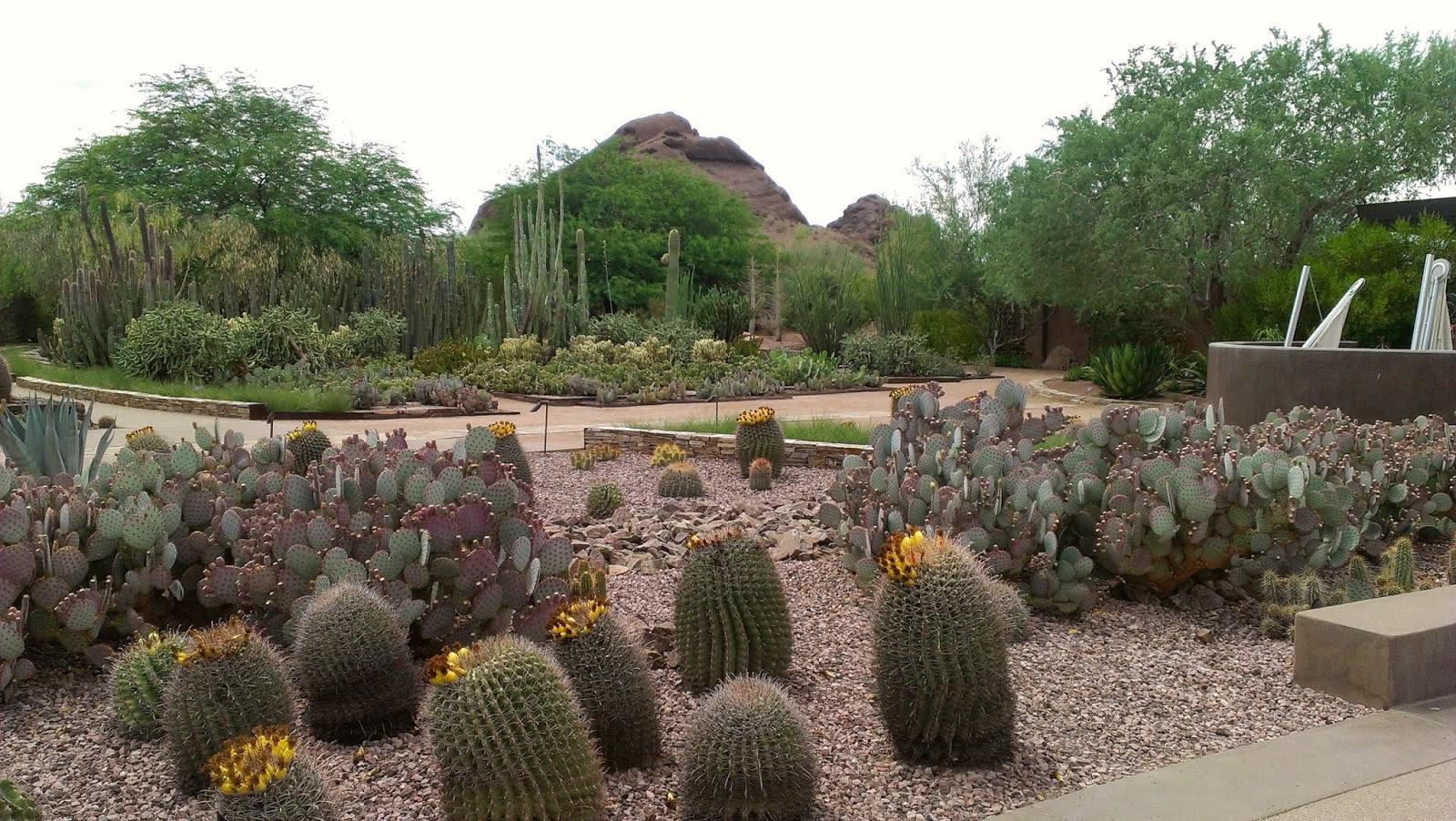 Got It Cook It Arizona Desert Botanical Gardens