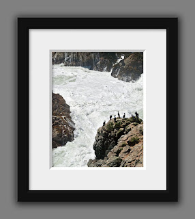 A group of cormorants rest on the rocky coastline of the turbulent Pacific Ocean.