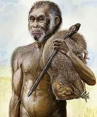 GAMBAR MANUSIA PURBA Homo Wajakensis