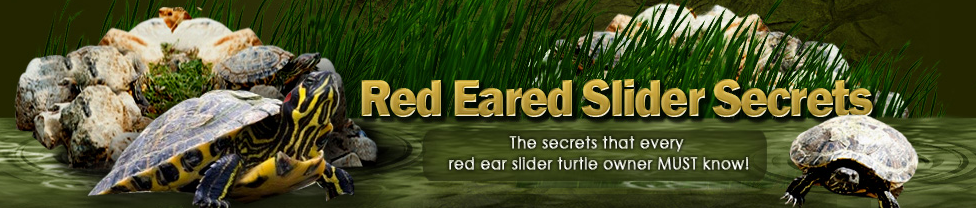 The Secret That Every Red Ear Slider Turtle Owner MUST Know!