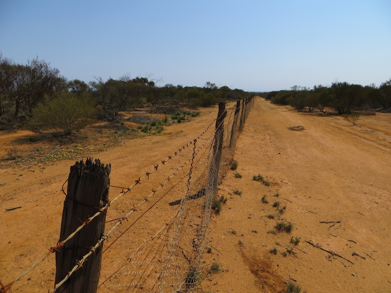 belonging rabbit proof fence