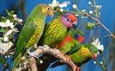 Aves exóticas y fantásticas en el paraíso