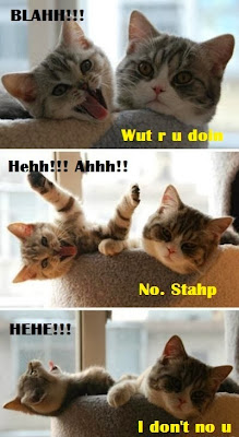 crazy lolcats