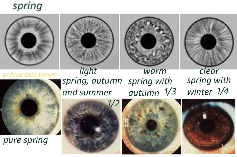 Eye Types & Iridology
