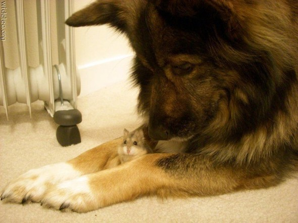 unlikely animal friendship, interspecies friends
