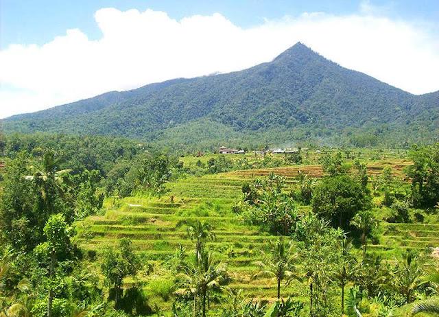Objek wisata Jatiluwih di Bali 2