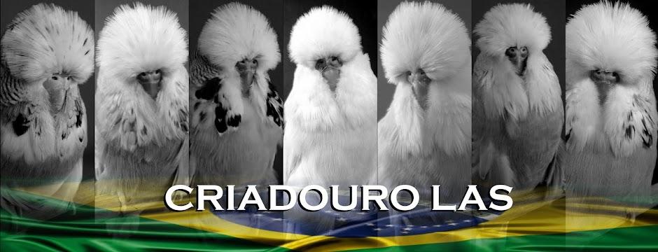 CRIADOURO LAS - FILHOTES