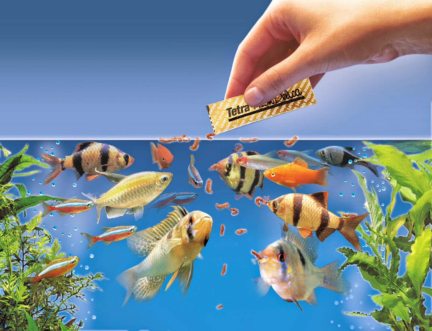 Freshwater aquarium fish vitamins - Aquarium Fish Feeding