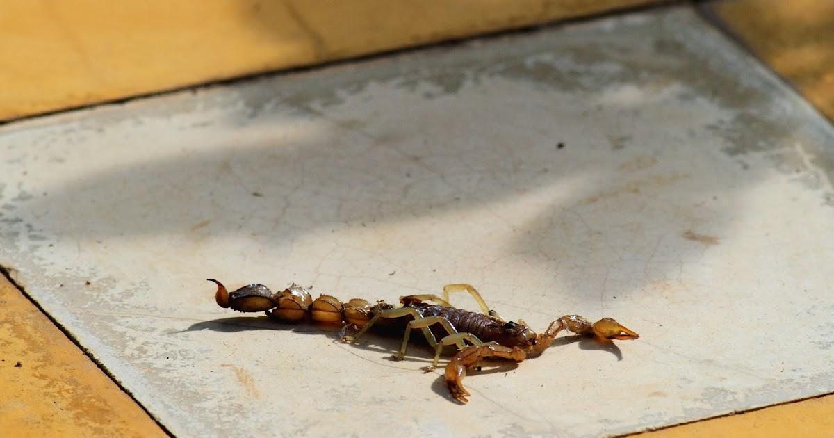 Flirter avec un homme scorpion