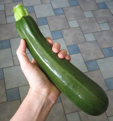 homegrown garden zucchini