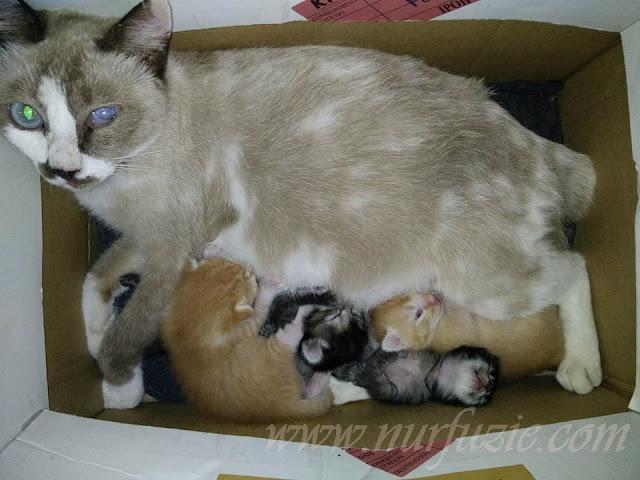kucing dan kotak