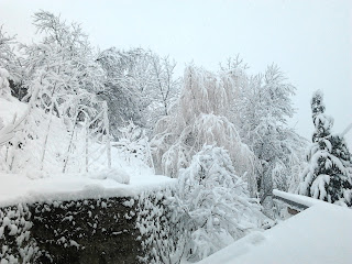 Blick durch das Fenster, 20. Februar 2012 - 8:15