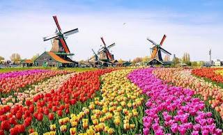 10 maddede Türkiye-Hollanda tarım karşılaştırması