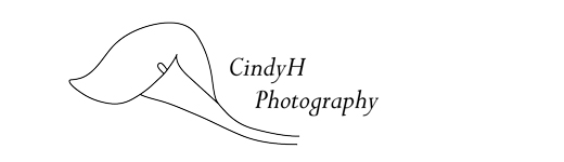 CindyH Photography