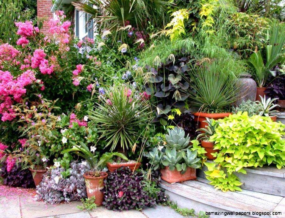 Outdoor Potted Plant Ideas  Potted Plant Ideas for Good Gardening