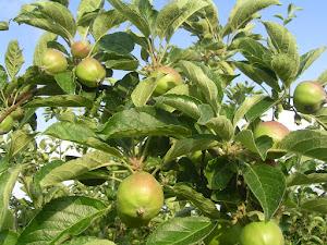 Csodaszép gyümölcsöskert