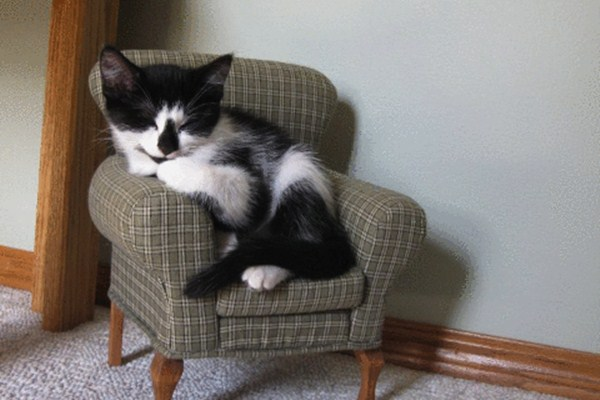 Funny cat pictures part 14, cat on sofa