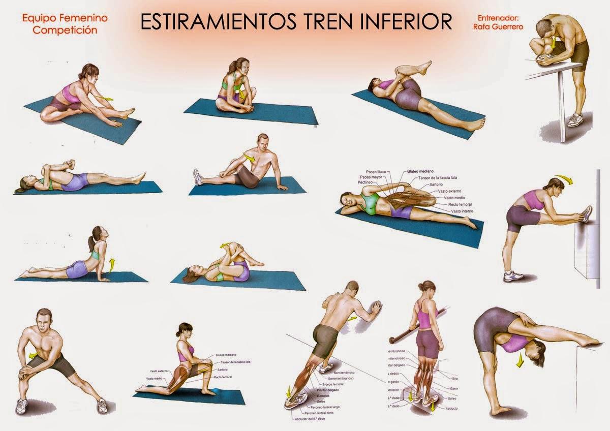 Anatomía Para el Movimiento: CALENTAMIENTO FÍSICO