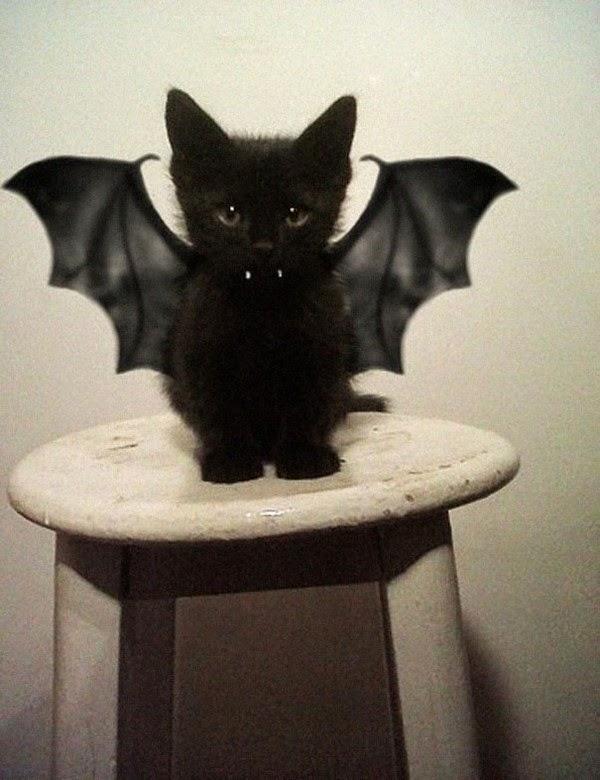 Disfraces para tu mascota en el Halloween ~ Solountip.com