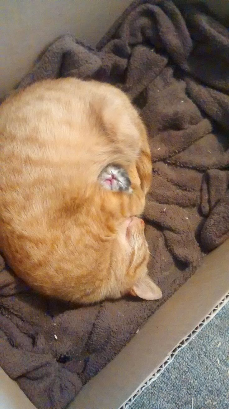 funny cat pictures, cute cats, cat photos