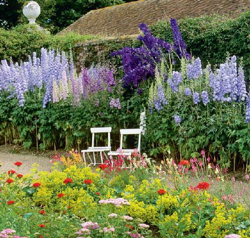 Godinton House Delphinium Flower Garden English