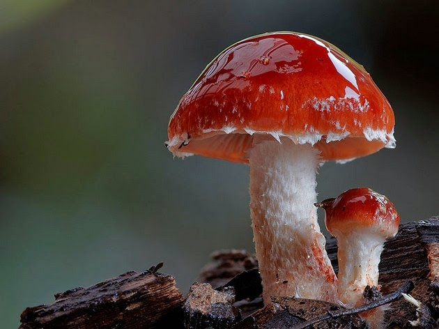 mushrooms and fungi photographed by Steve Axford-9