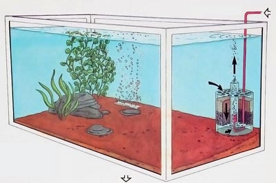 how to take care of a fish without a filter